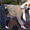 Инструкция по выбору одежды для собак
