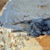 Настоящая история лягушки-путешественницы