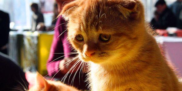 Инструкция по воспитанию в котах бойцовских качеств