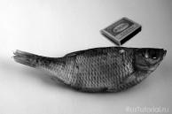 Рыба размера S