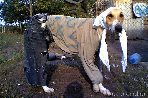 Одежда Для Собак Инструкция