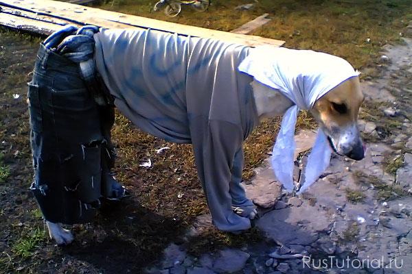 Выбор одежды для собак - дело непростое