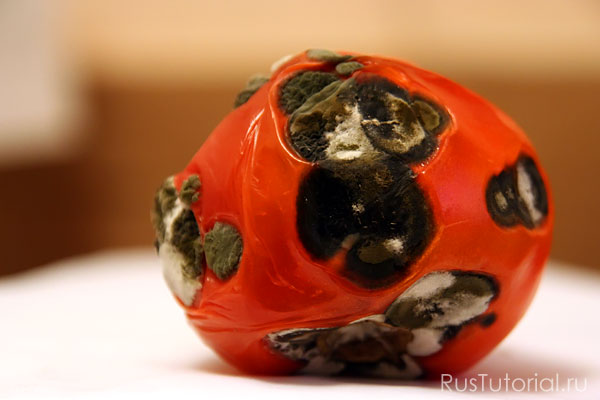 Пятно плесени на помидоре, напоминающего олимпийского мишку