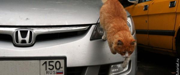 Один боевой рыжий кот — это один боевой рыжий кот.